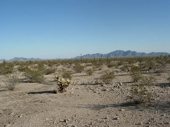 A view of the flatlands where cacti and shrubs grow. Mountains stand in the horizon.