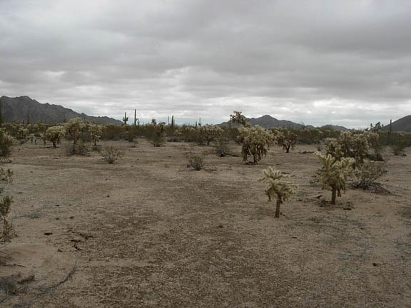 Looking east to Saguaro Gap that will take us into Growler Valley. The gap is the low area just to the left of center.