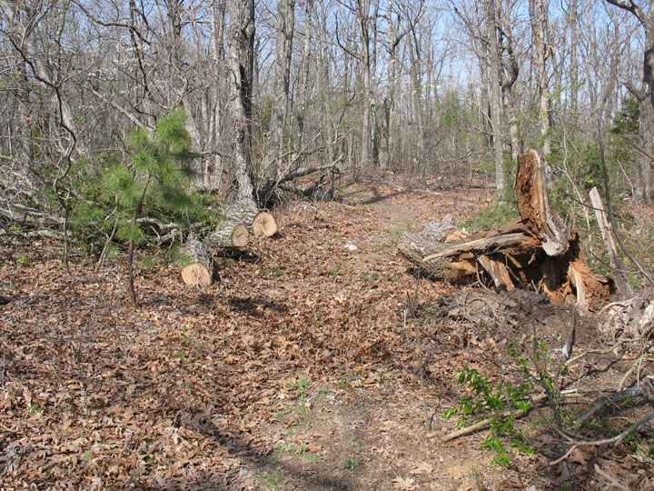 Pieces of a large fallen tree, cut and stacked beside a woodland trail.