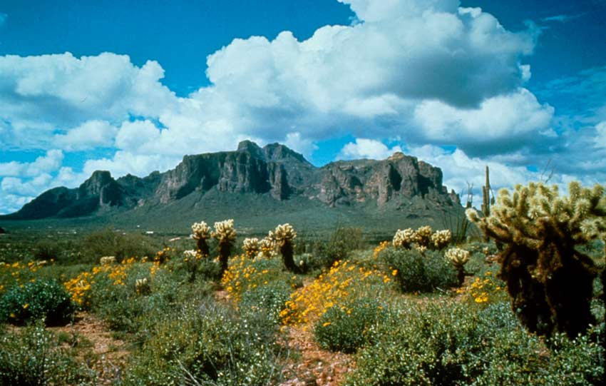 An iconic desert scene looking out over a lush desert basin covered in yellow flowers Tall rocky mountains rise in the distance under a blue sky with large puffy white clouds.