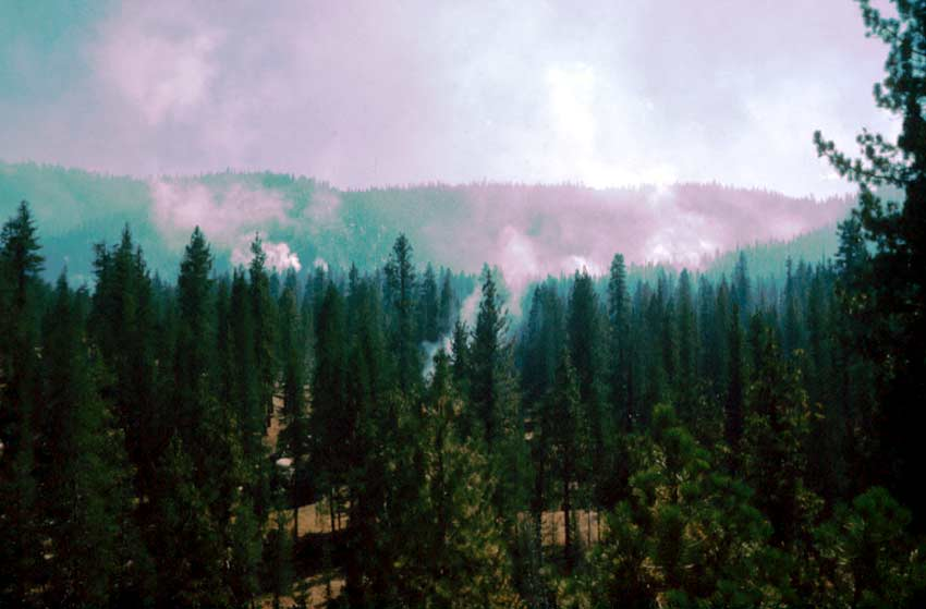 Looking out over the forest, plumes of smoke rising above to form a hazy layer above.