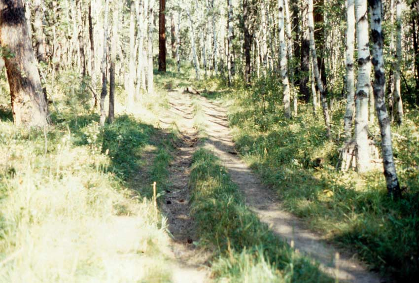 Looking down an old road through the forest, the wheel ruts almost overgrown with green grass.