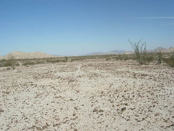 Another view of the flatlands of the Cabeza Prieta Wilderness. Few shrubs, cacti, and rough terrain characterize this area.