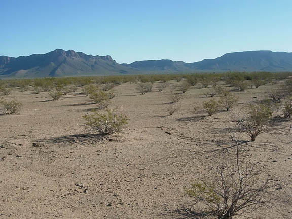 Looking east over the flat desert landscape towards Temporal Pass in the Granite Mountains.