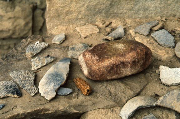 Artifacts (mano, corncob, potshards) from Spring House.