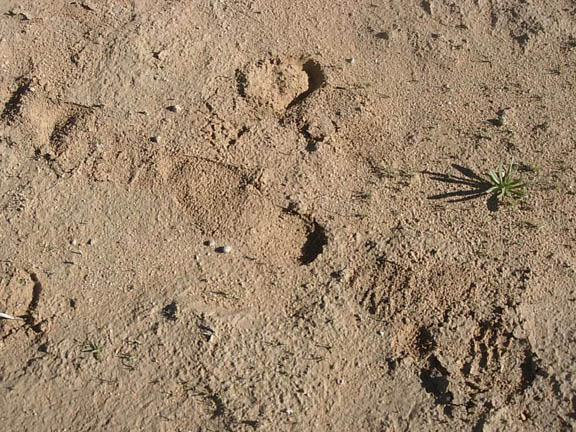 Footprints in the desert dust.