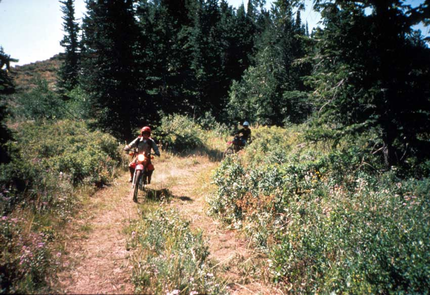 Two people riding dirtbikes down a wide forest trail.
