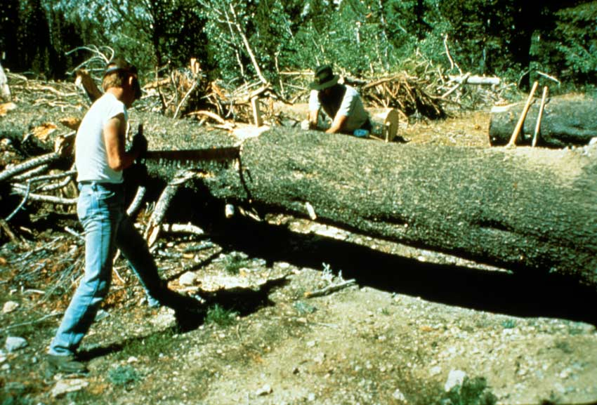 Two men use a large two-person hand saw to clear a large blow-down tree across the trail.
