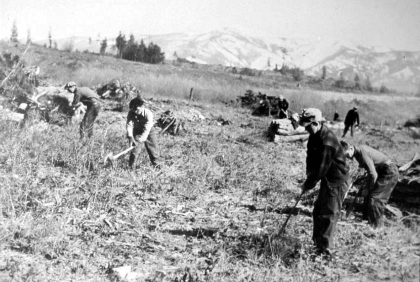 A vintage black and white image of many workers clearing a field using hand tools.