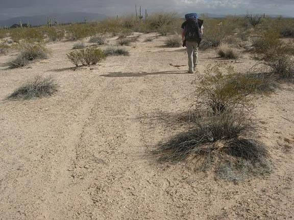 More tire tracks in the Cabeza Prieta Wilderness.