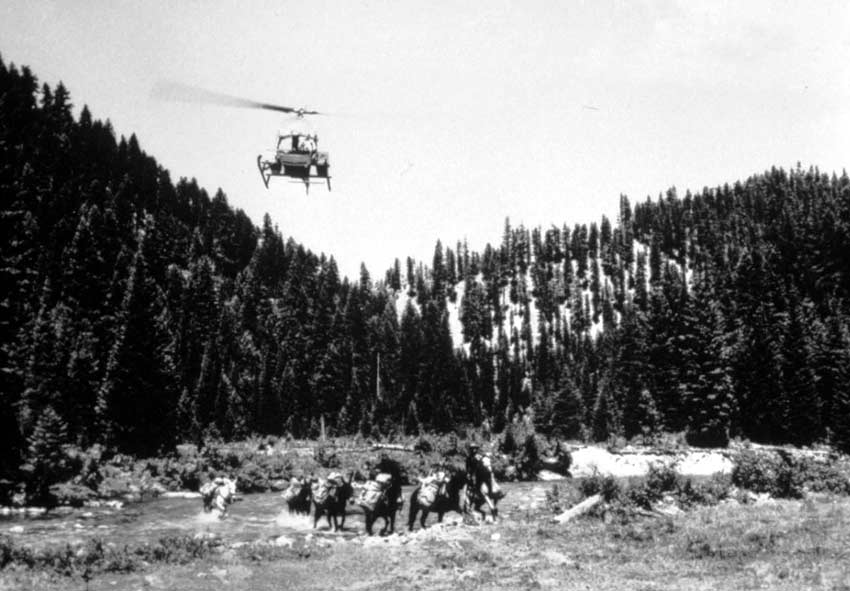 A vintage black and white image of a helicoppter hovering over a string of pack horses crossing a stream, forested ridges rising behind.