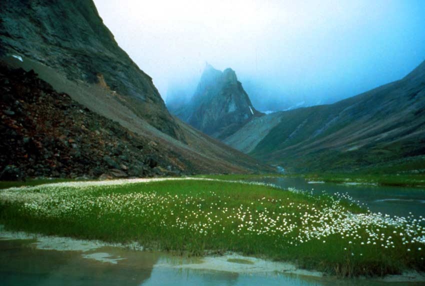 Mist-cloaked valley with white wildflowers and standing water in the foreground.