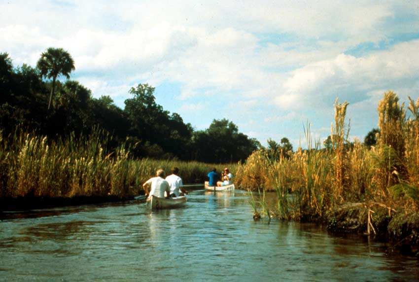 Two silver canoes paddling through a narrow swamp channel, surrounded by tall grass and palm trees.