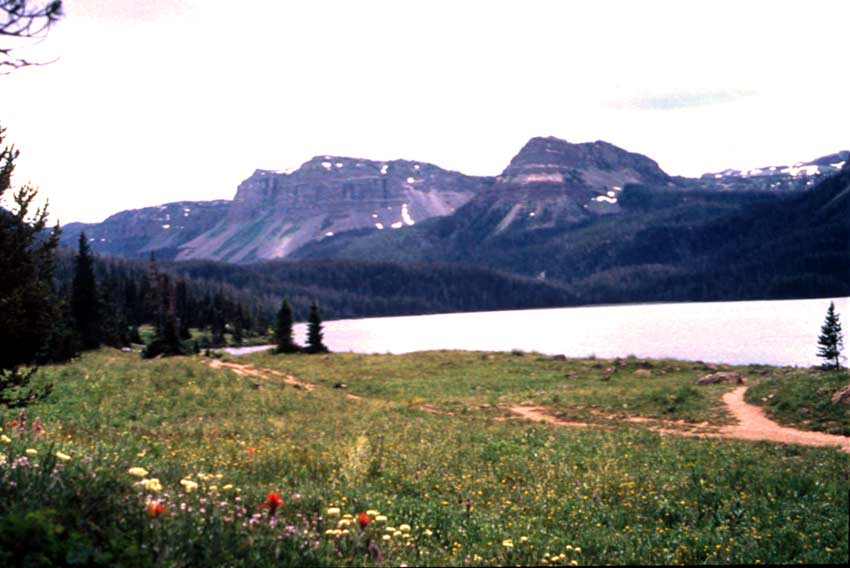 A field of wildflowers along the edge of a large lake, surrounded by rocky mountains rising from forested hills.