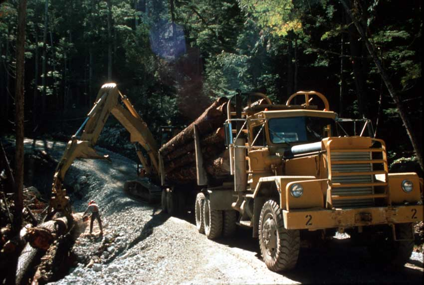 Large machinery loading trees onto a yellow logging truck, along a narrow forest road.