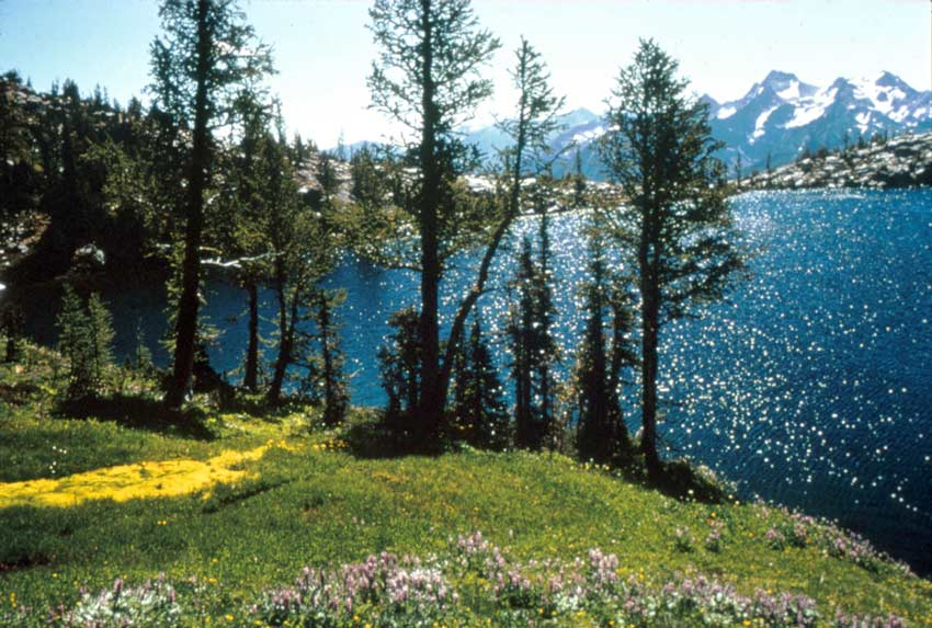 A small patch of pink wildflowers on the edge of an alpine lake with sparkling blue water. Snowcapped peaks rise from the far side of the lake, under an empty sky.