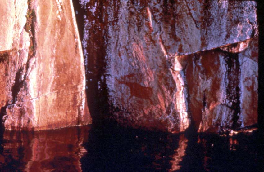 A close-up of a rocky face with several petroglyphs, just above the surface of the water.