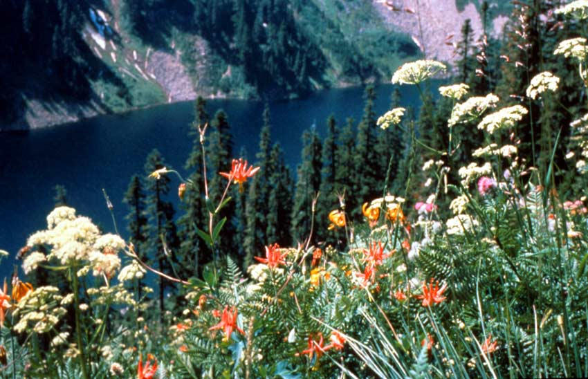 Looking over a colorful patch of assorted wildflowers, to an alpine lake at the base of a valley far below.