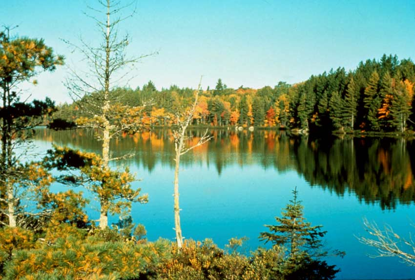 A tranquil scene of a small lake surrounded by a forest in bright fall colors, reflecting off the mirror surface of the water.