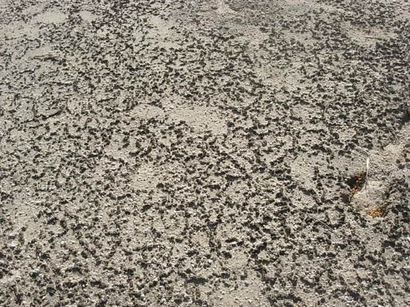 The broad, flat expanse of the desert floor where water dried, leaving cracked mud.