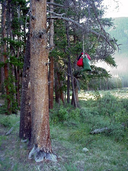 Food hanging from a tree limb. According to the description the food was improperly hung.