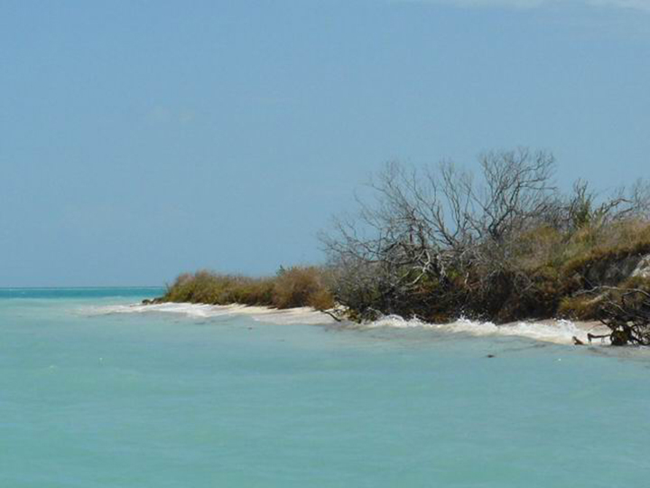 Light-blue ocean water washes against a sandy beach covered in green-bushy trees.