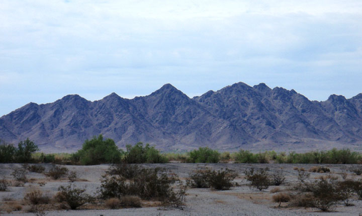 Looking across a desert landscape spotted with low foliage, rugged rocky mountains rise from the desert floor in the distance.