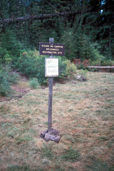 A sign asks people to please not camp in this area because it is a resoration area. The grass is a mix of dry brown and lively green and in the background are shrubs and trees.