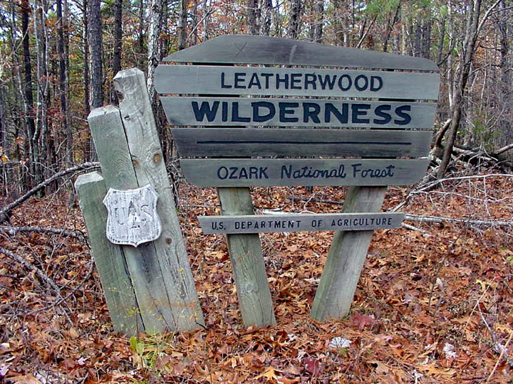 A large wooden sign standing in the forest, surrounded by a bed of brown leaves on the forest floor.