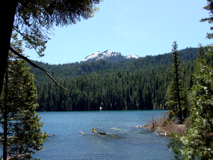 Looking out from beneath the trees over a small lake to the forest on the far side. A snowcapped mountain peak rises from the trees far away.