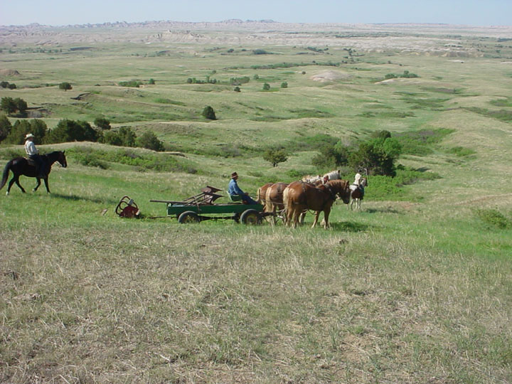 A horse-drawn cart being pulled through the grass, with a desolate expanse of the Badlands Wilderness beyond.