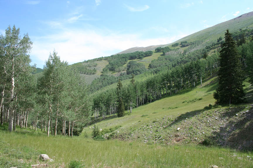 A forested valley, interspersed with large grassy meadows creeping up the low slopes beyond.