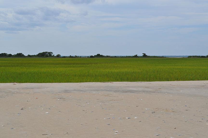 A grassy marshland
