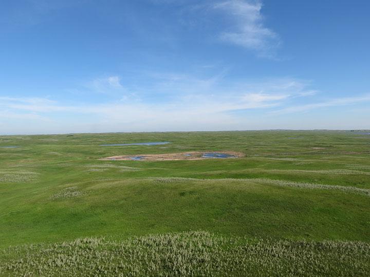A green grassland and wetland