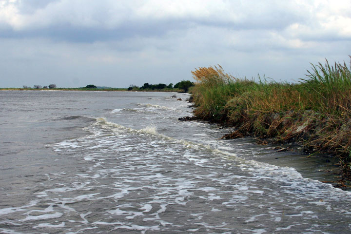 Marsh grass succumbing to constant erosion along the coast.