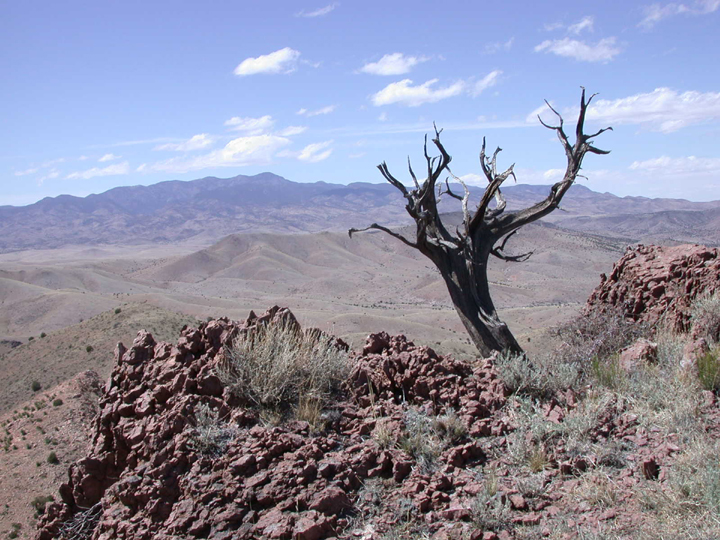 A twisted dead tree sites atop a rocky mountain peak with desert hills stretching over the horizon.