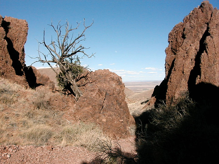 The weathered remains of a desert tree stand on a brown rock outcropping, looking past large pinnacles of rock, out to the valley below.