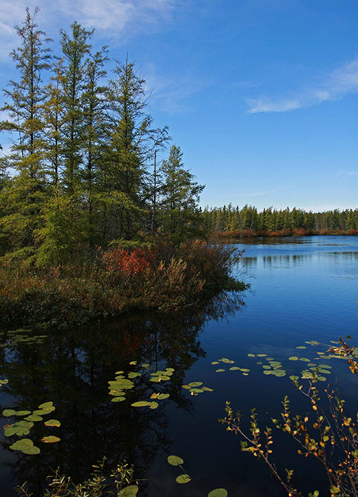 A blue lake with leaves floating in it and islands in the background