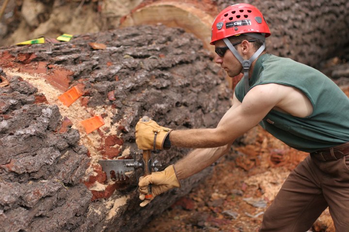 A male volunteer, Aaron Tellion, uses a crosscut saw to cut through a large tree trunk. Aaron wears a red hard hat, a green sleeveless shirt, and sunglasses.
