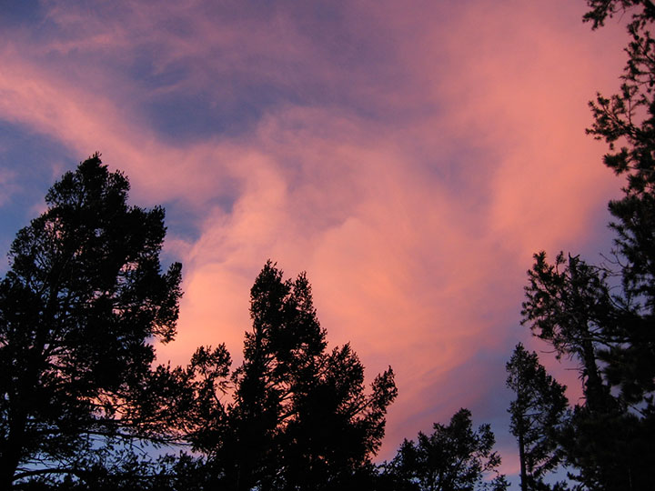 Pink sunset over trees