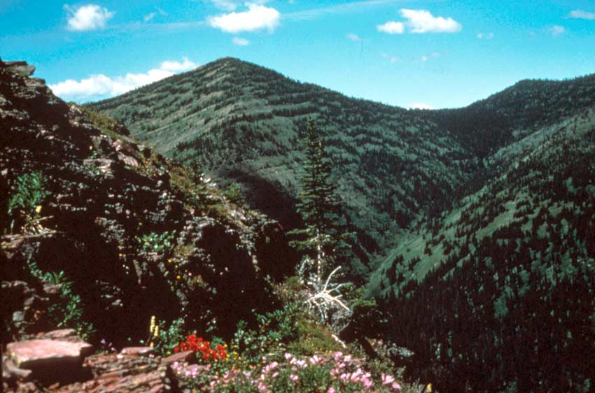 Looking across a large forested ravine, low mountains reaching towards a bright blue sky.