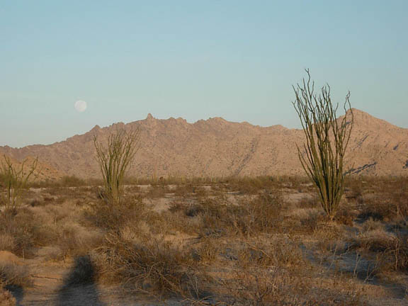 Nearing the end of the day, the moon reveals itself in the evening sky near the top of a mountain range. In the foreground of the photo there are ocotillo plants standing tall against the mountains.