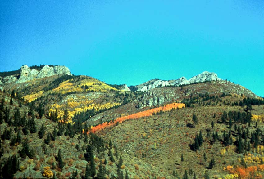 Looking up an open hillside dotted with evergreen trees and small bands of deciduous trees in bright orange and yellow autumn color.
