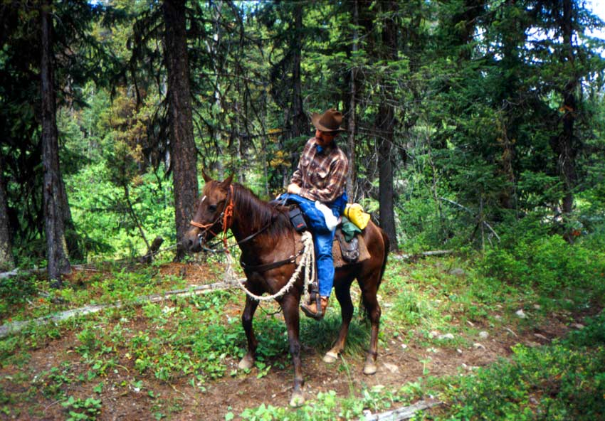 A man in a cowboy hat, riding a brown horse along a forest trail.