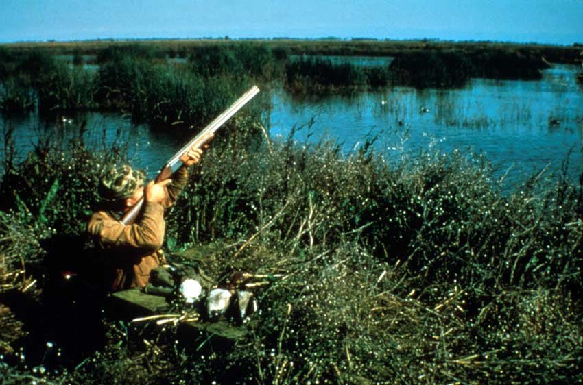 A waterfowl hunter standing in a blind, along the edge of a marsh.