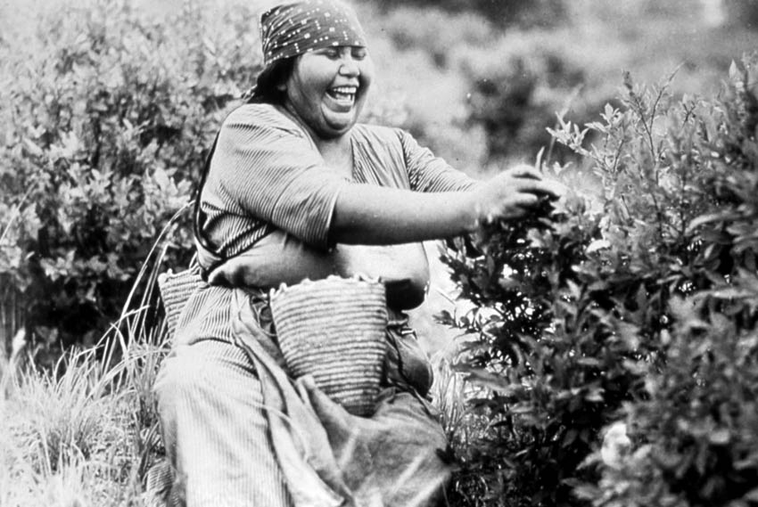 A vintage black and white image of a Native American woman harvesting berries.