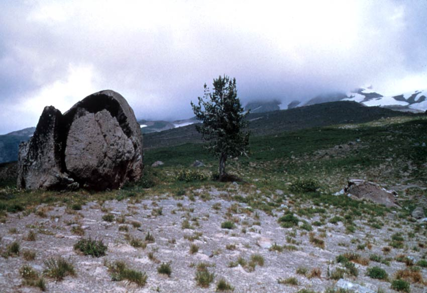 A large boulder and a lone tree standing in an empty alpine landscape, stretching up towards a high peak shrouded in white cloud.