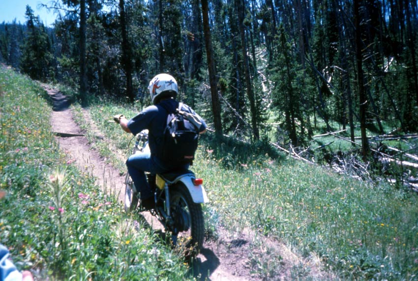 A person riding a small motorbike down a narrow trail through the forest.