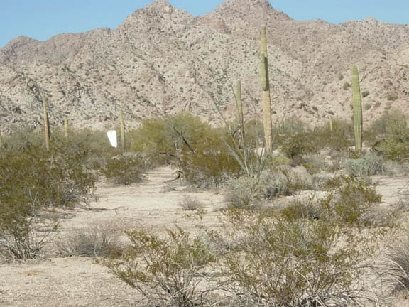 A photo of the Brian Mountains and in the foreground are cacti and lots of other desert shrubs. The day appears to be clear and sunny.