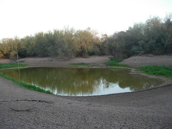 A manmade pond surrounded by large desert trees and shrubs.